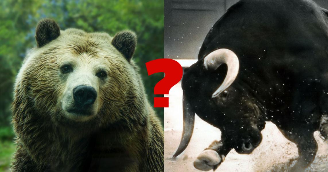 bull vs bear